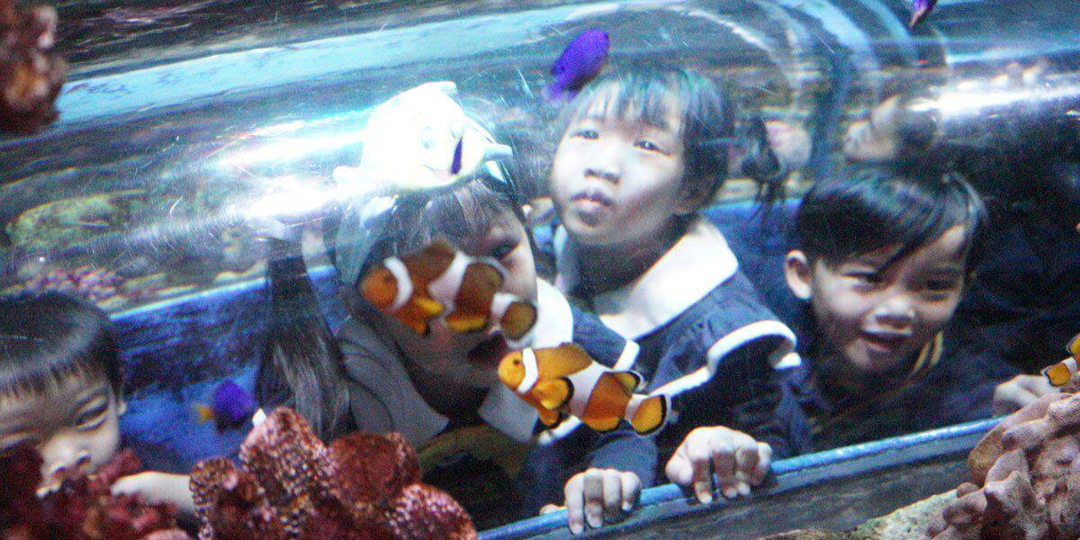 K1 Students found Nemo